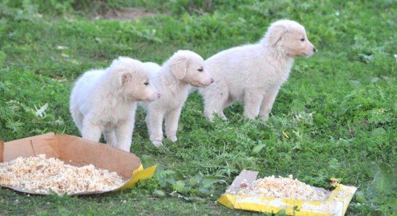 Il giorno 6 dicembre vedendo che nessuno aveva provveduto al recupero dei  cuccioli, mi sono recato al canile a sollecitare la soluzione del problema.