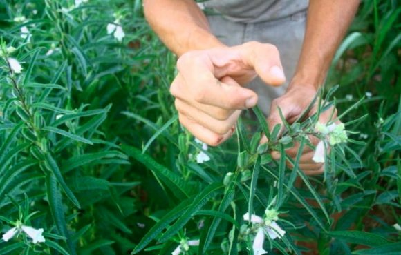 capogranitola-azienda-agricola-bio-2