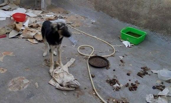 Cucciolo-abbandonato-in-un-terrazzino-in-mezzo-ai-suoi-escrementi 2