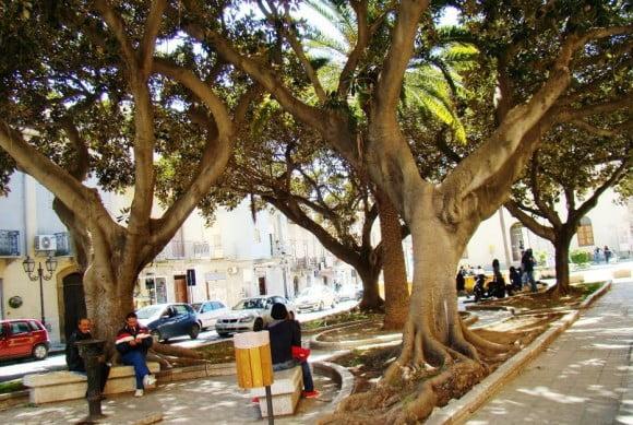 alberi piazza matteotti