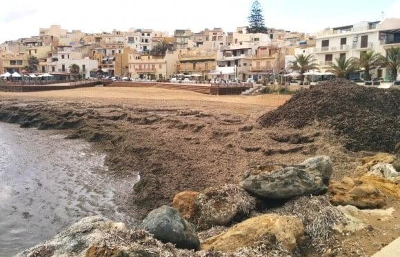 alghe posidonia selinunte