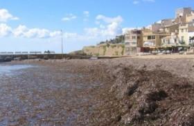 alghe selinunte