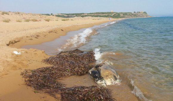 animale spiaggia triscina 2