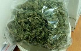 arresti droga