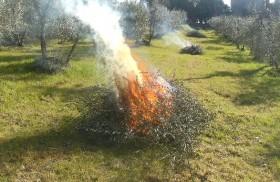 bruciare potature agricole