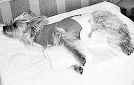 cane-azzannato-castelvetrano