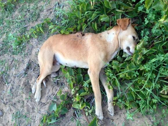 cani uccisi selinunte