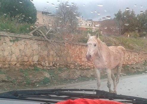 cavallo castelvetrano