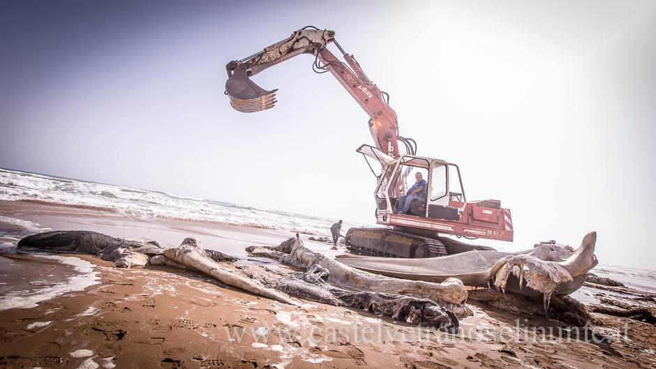 foto-balena-triscina-cnr-13