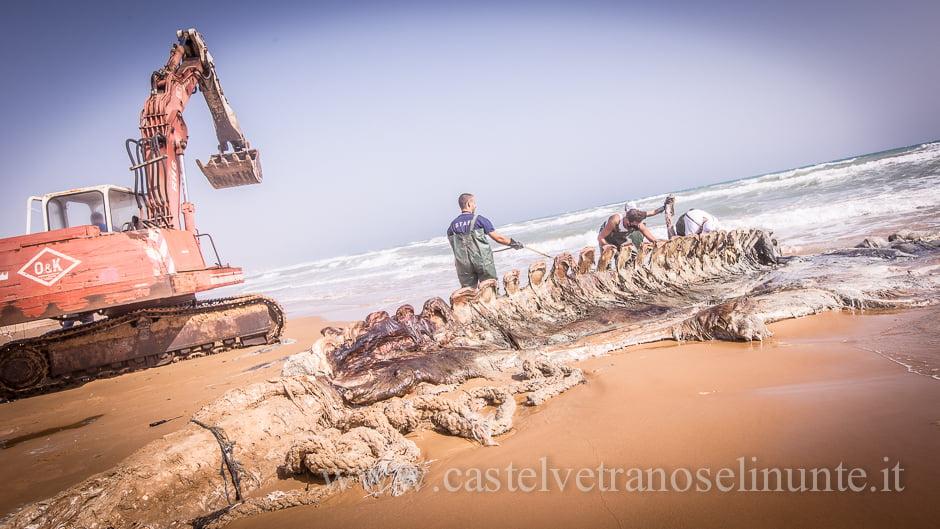 foto-balena-triscina-cnr-16