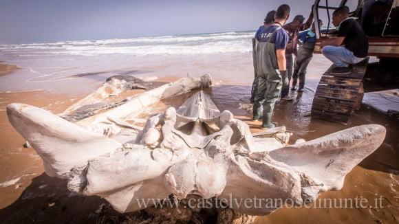 foto-balena-triscina-cnr-17