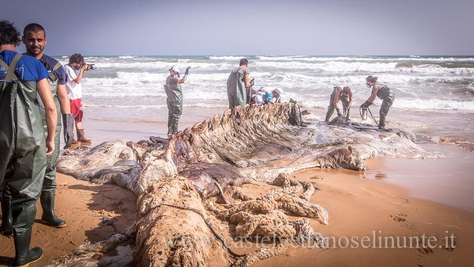 foto-balena-triscina-cnr-19