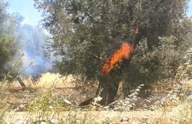 incendio castelvetrano