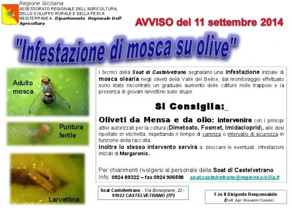 infestazione olive