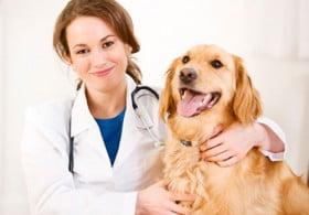 medico-veterinario-di-base