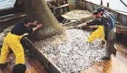 pesca-novellame