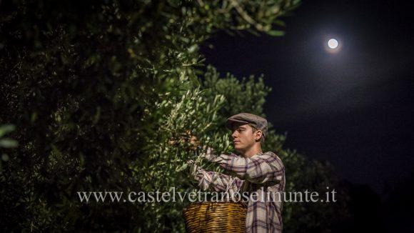 raccolta-olive-notte-23