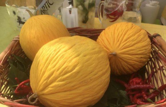 sagra-del-melone-giallo-gibellina-4