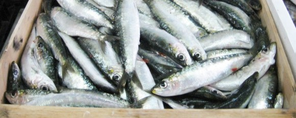 sardina-selinunte deco