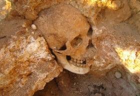 scheletro favignana