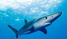 squalo mazara del vallo