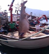 squalo san vito