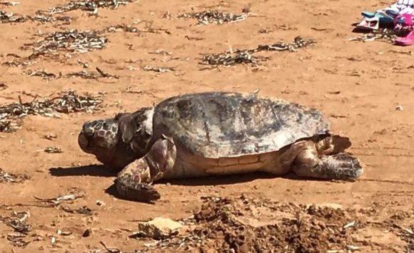 tartaruga-triscina-di-selinunte