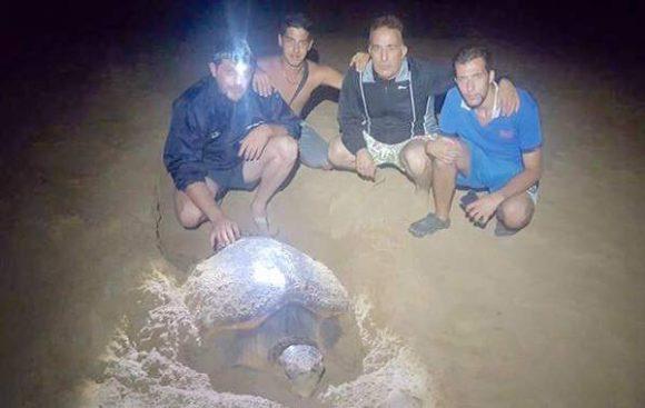 tartaruga triscina di selinunte 3