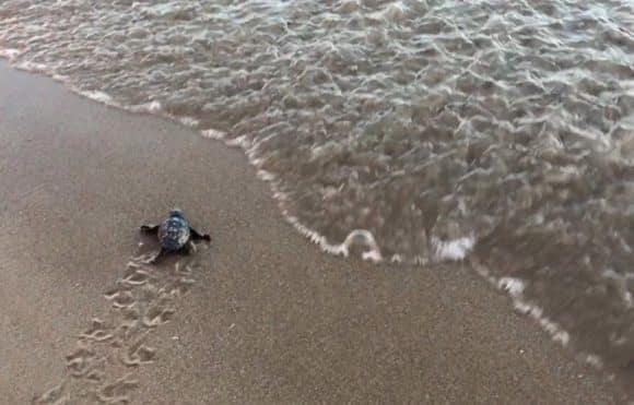 tartarughe menfi porto palo 1