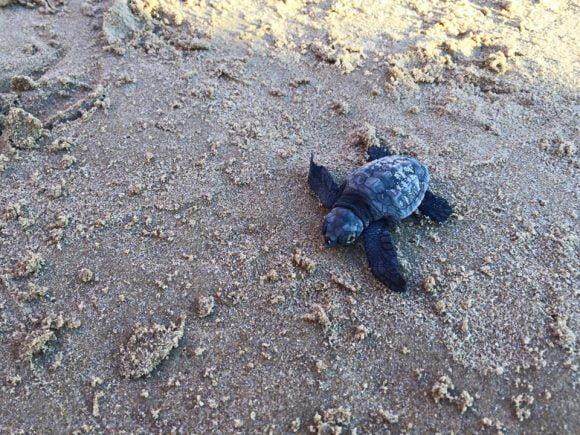 tartarughe menfi porto palo 3