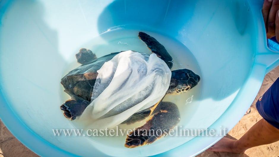 tartarughe triscina-11