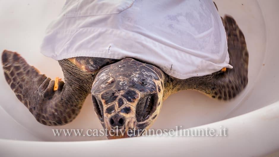 tartarughe triscina-12