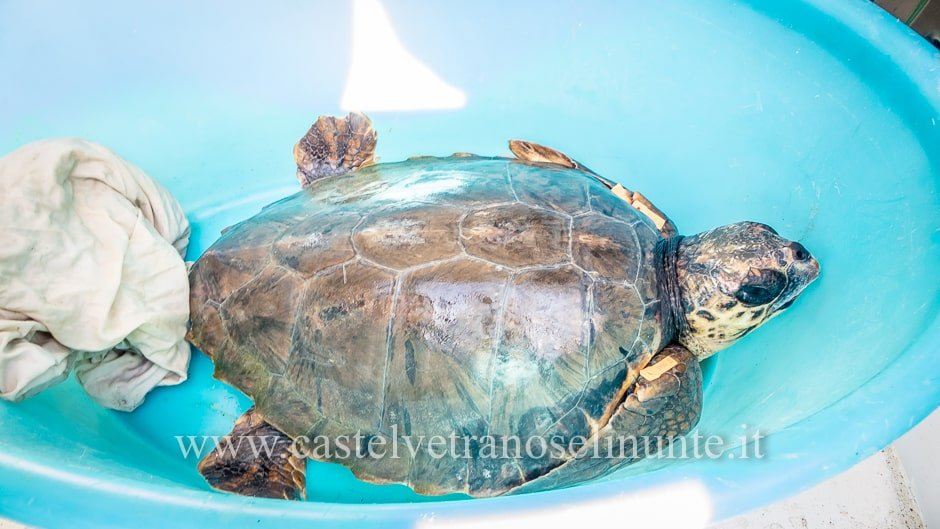 tartarughe triscina-13