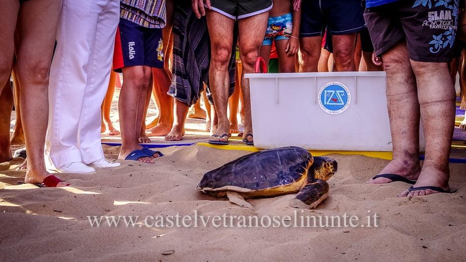 tartarughe triscina-15
