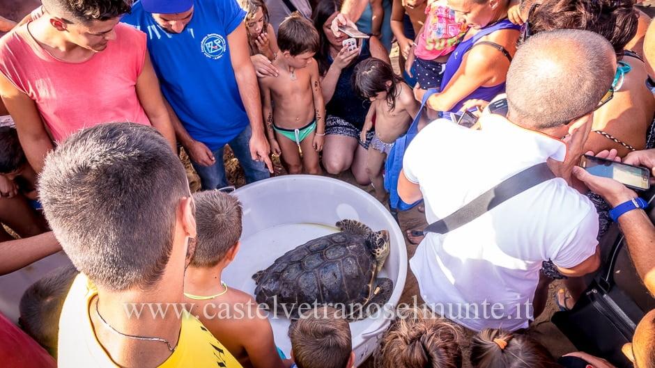 tartarughe triscina-17