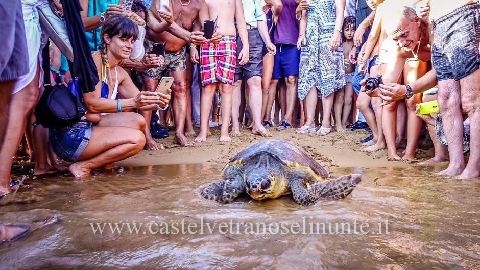 tartarughe triscina-19