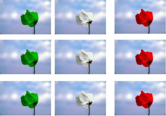 vento tricolore papaveri ok