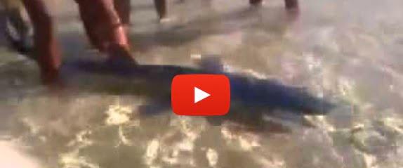 video squalo menfi